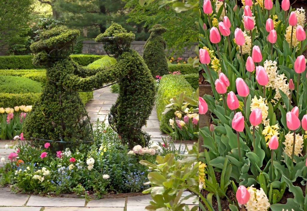 Topiary-&-Tulips