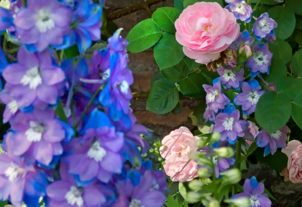 Delph-&-Roses