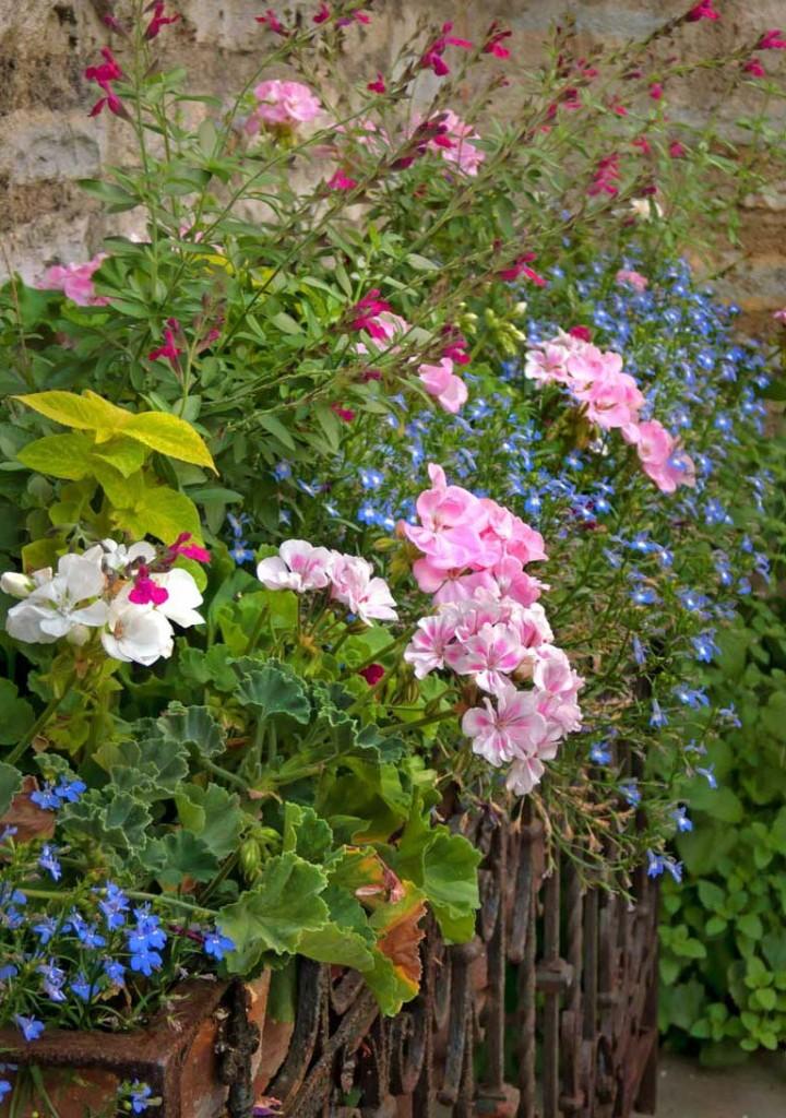 Flower-RackCentered