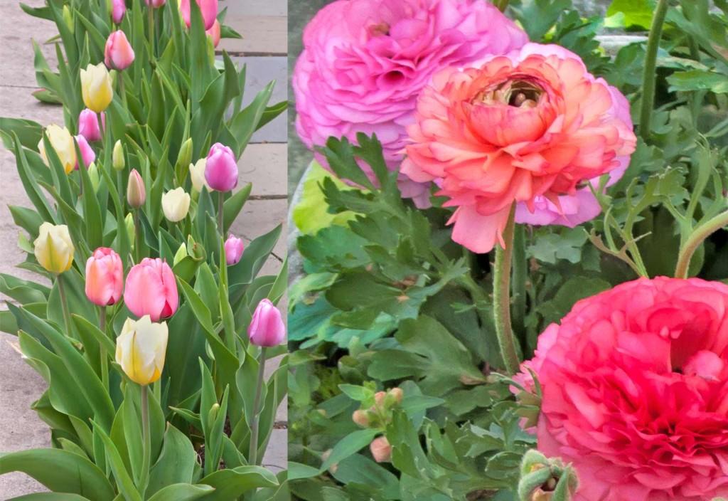 Tulips-&-Ranunculus