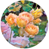 website-photo-skill-type-roses