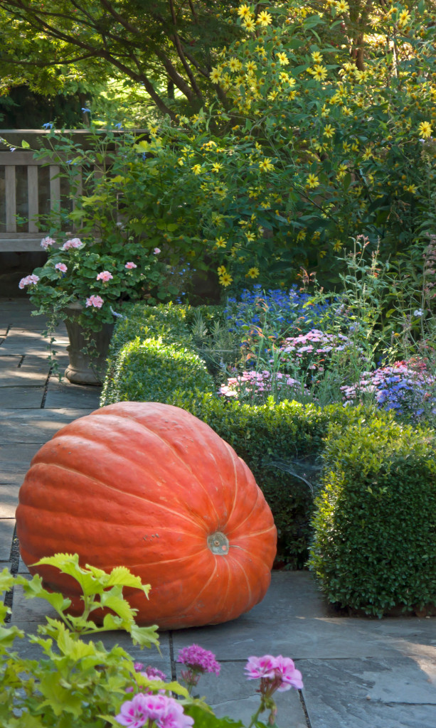 Pumpkin-in-the-Courtyard