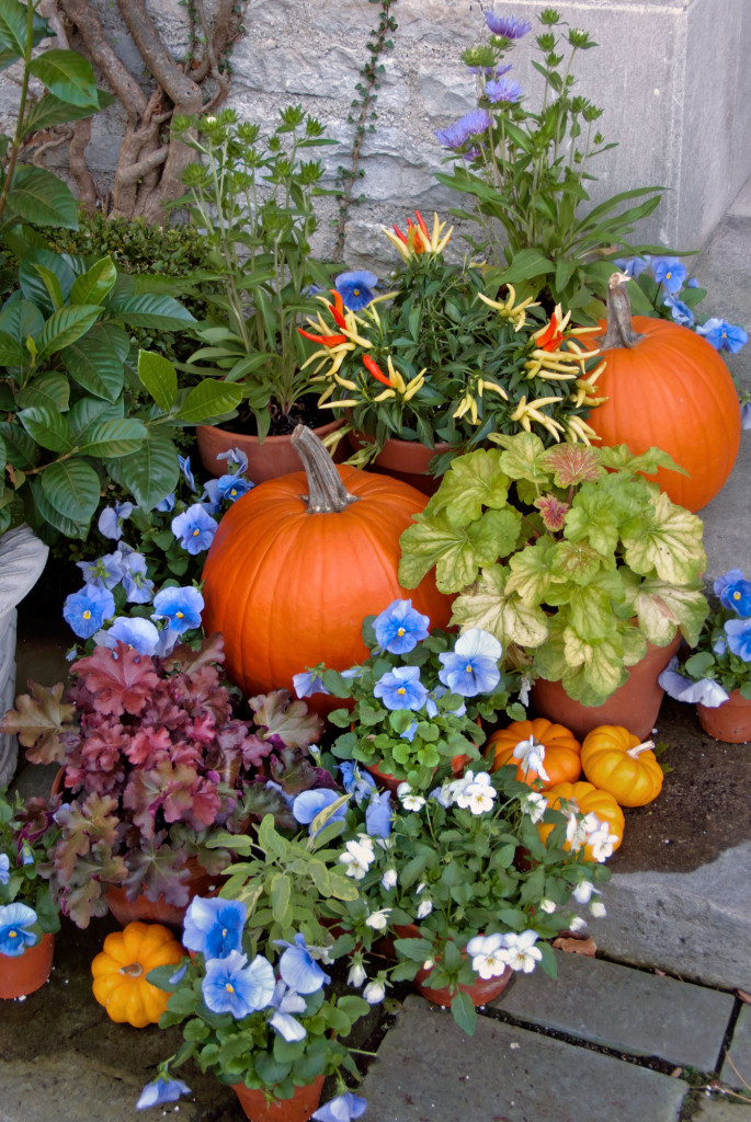 Pumpkins-&-Pansies